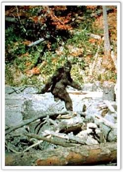 Bigfoot_sighting
